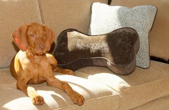 Sofa Toss Pillow